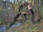 Ulomený strom v ulici Prokopa Holého v Teplicích