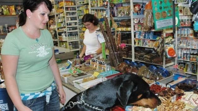 V zoomarketu jsou zákazníky i pejsci