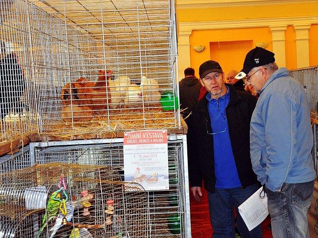 Vánoční výstava drobného zvířectva v Žalanech.