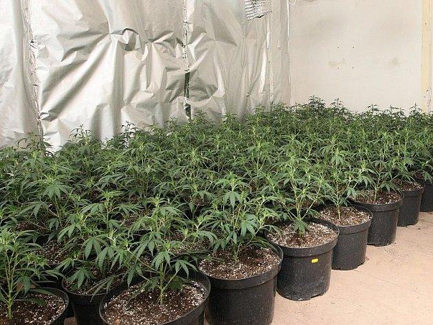Další objevená pěstírna marihuany - Modlany