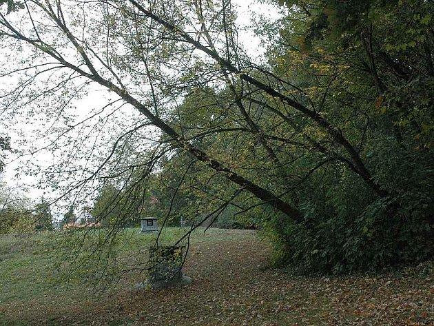 Trojice stromů na Bílé cestě v Teplicích