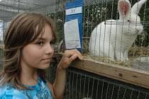 Výstava králíků na Oseckých slavnostech