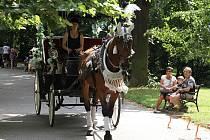Kočár tažený koněm v Teplicích.