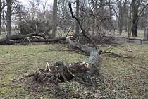 Následky silného větru z neděle 11. na pondělí 12. března v Teplicích. Zámecký park.