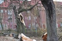 Staré vrby za kinem Lípa v Duchcově nevydržely nápor větru.