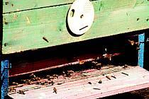 Včelky vylétají z úlu