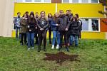 Žáci ZŠ Plynárenská vysázeli 30 cibulek žlutých krokusů