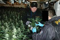 Na Teplicku policisté objevili pěstírnu s 5 tisíci rostlinkami marihuany