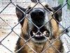 Proti agresivním psům může částečně pomoci vyhláška