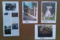 Žáci ZŠ Proboštov vystavují své fotografie ve vestibulu radnice.