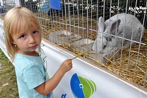 Výstava drobného zvířectva v zahradním areálu v Oseku.