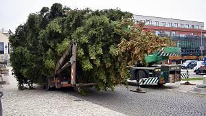 Vánoční strom v Teplicích