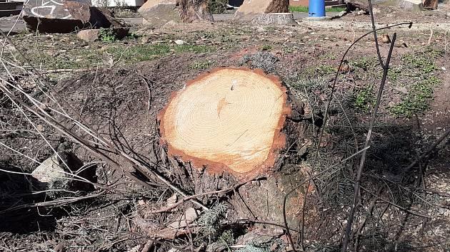 Stromy v Jugoslávské ulici musí pryč, jsou nebezpečné pro okolí.