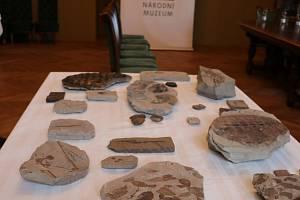 """Doly darovaly vzácné zkameněliny, jsou mezi nimi i """"sloní uši""""."""
