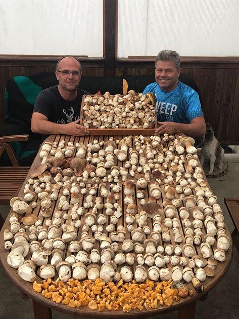 Přes 600kusů hub nedávno našel Bořek Chládek zteplické restaurace Aladdin skamarádem Zdeňkem Březinou vlesích vKrušných horách.