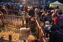 Ovečky jsou velkým lákadlem pro děti.