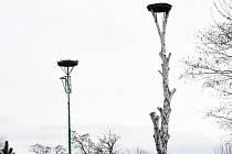 Čapí hnízda jsou na soukromé zahradě v Duchcově poblíž koupaliště.