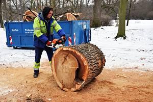 Kácení stromů v Zámecké zahradě.