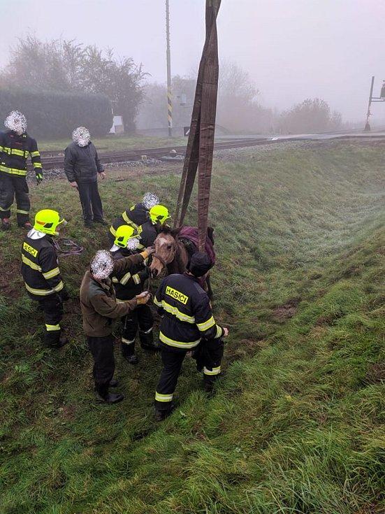 Kůň skončil v příkopu poblíž zastávky Dolní Žalany, pomohli mu hasiči.