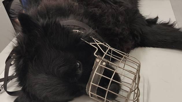Brutální případ týrání psa se odehrál začátkem týdne v Krupce na Teplicku.