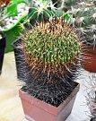 Klub kaktusářů Teplice pořádá na MěÚ v Krupce Prodejní výstavu kaktusů a sukulentů.
