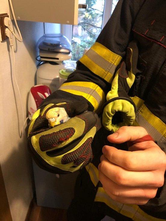 Tepličtí hasiči zachránili opeřence, který uvízl v digestoři.