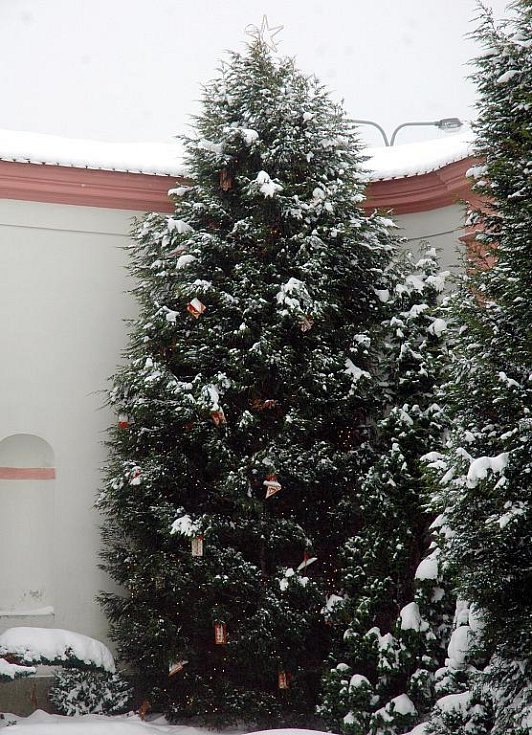 Vánoční strom u kláštera Osek