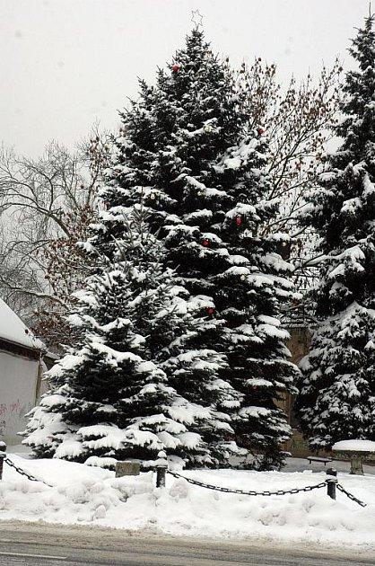 Vánoční strom na náměstí v Oseku