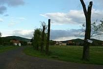 Prořezané stromy v Měrunicích