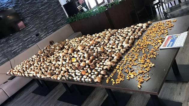 Houbaři z teplické restaurace Aladdin opět vyrazili do lesů v Krušných horách a i tentokrát byli úspěšní. Při první návštěvě si z lesa domů přinesli 600 hub a při druhé dokonce 1100!