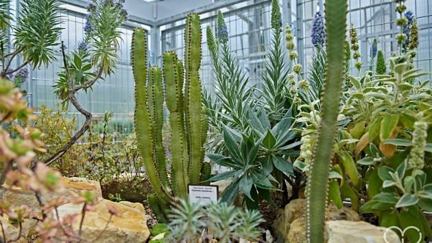Skalničkový skleník v Botanické zahradě představuje rostliny nejen z Evropy, ale také z Asie, Jižní Ameriky, Nového Zélandu, Kanárských ostrovů, Madeiry nebo z chilské poušti Atacama.