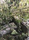 Spadlé stromy a větve poničily náhrobky na teplickém hřbitově.