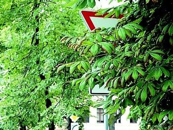 Dopravní značka, která není vidět kvůli rozrostlému stromu.