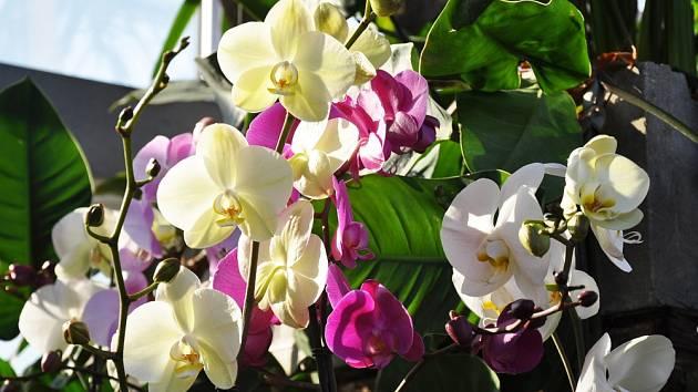 Dny kouzelných orchidejí