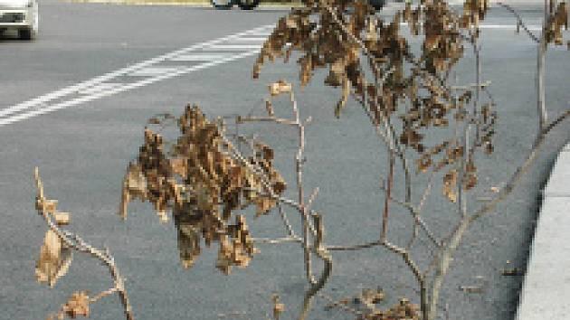 Kdo ukradl kanál, myslel na bezpečí řidičů a do díry nastrčil větev od stromu.