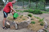 Michal Dvořák zalévá část nové komunitní zahrady v Teplicích