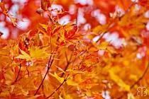 Barevné listí.