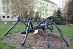 Starý nemocný akát se proměnil v pavouka.