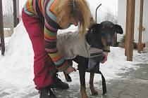 Psi si v zimě zaslouží zvýšenou péči.