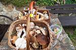 Nalezené houby zaslali: Ivan a Šárka Niklovi