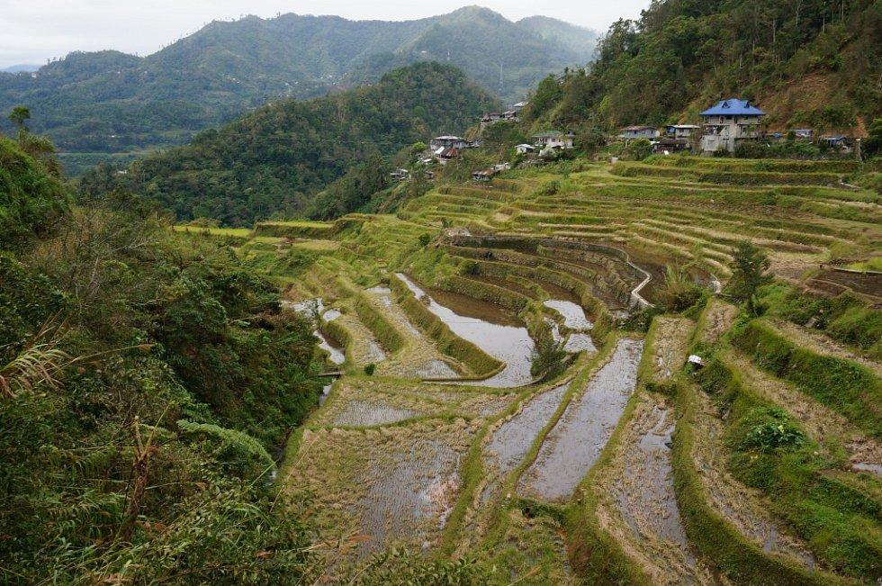 RÝŽOVÁ TERASOVITÁ POLE Banaue jsou zapsána do seznamu kulturního dědictví Unesco.