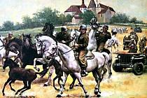 LIPICÁNI. Toto plemeno koní bylo Američany zachráněno z Hostouně a převezeno za linii fronty k Bad Kötztingu.
