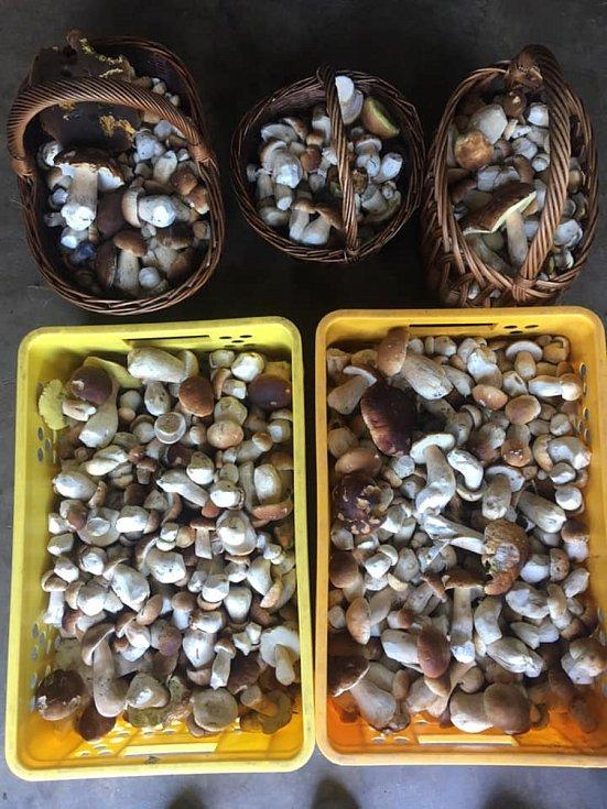 Nalezené houby zaslali: Denisa Levá