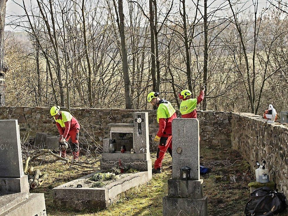 Jilm u hřbitovní zdi v Loučimi šel k zemi.