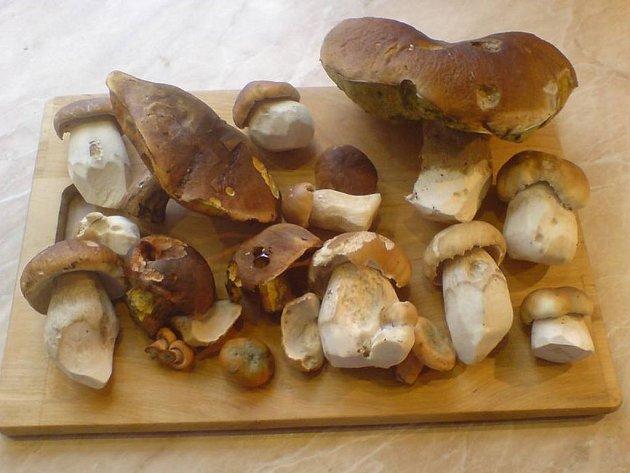První letošní smaženici z těchto krásných hub měl ve středu i Stanislav Šatek ml. z Kouta na Šumavě.