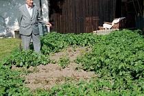 Třiaosmdesátiletý Matěj Konop nám ukázal zničené brambory.