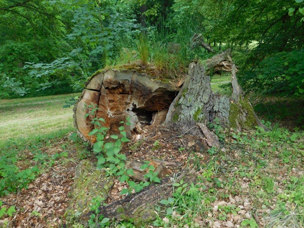 Dutiny stromů, kde žijí brouci.