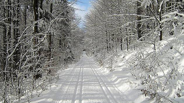 SNĚHU DOST. Stopy na Signálce i Čerchovském okruhu jsou upraveny a běžkaři si užívají.