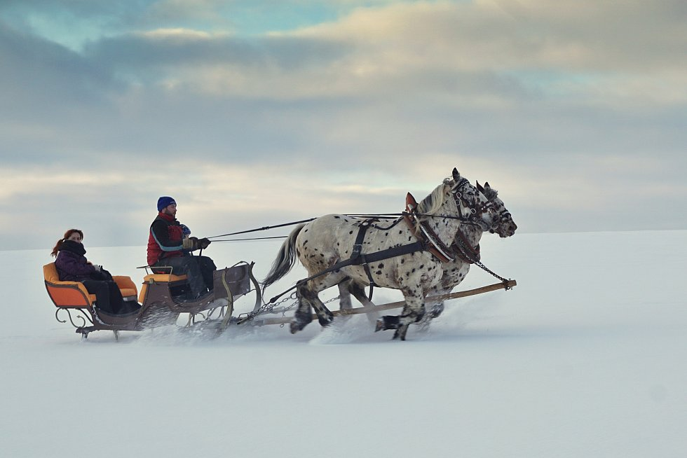 Koně mají sílu, utáhnou nejenom sáně.