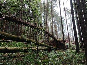 Vichr polámal tisíce kubíků dřeva
